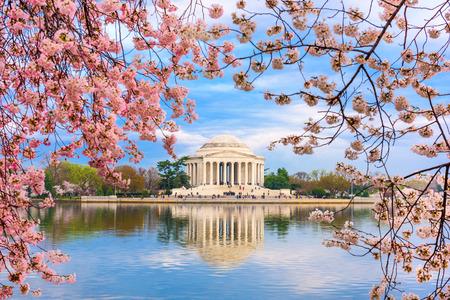 flor de cerezo: Washington, DC en la Cuenca Tidal y Jefferson Memorial durante la primavera.