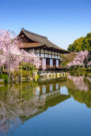 ground cherry: Kyoto, Japan at Heian Shrines pond in the spring season. Editorial