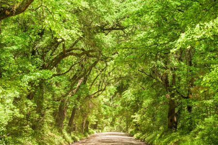 southern: Edisto Island road in South Carolina, USA.