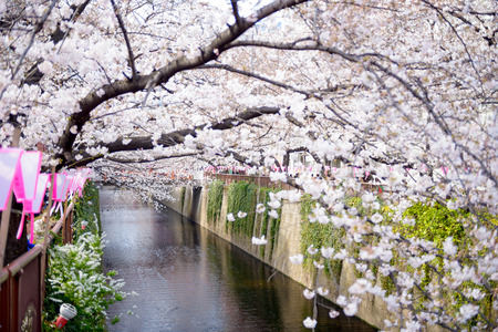 Tokyo, Japan at Meguro canal in the spring.