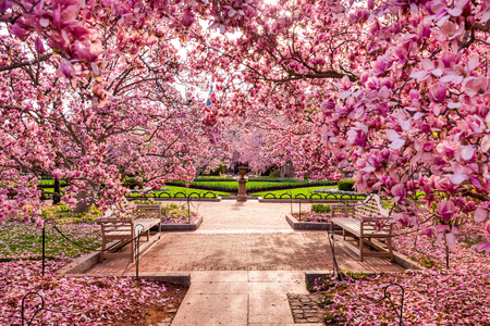 washington state: Washington DC spring foliage near the National Mall. Stock Photo
