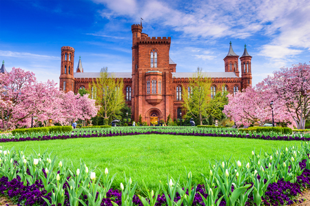 cherry blossoms: Washington DC - April 12, 2015: The Smithsonian Institution Building in the spring season.
