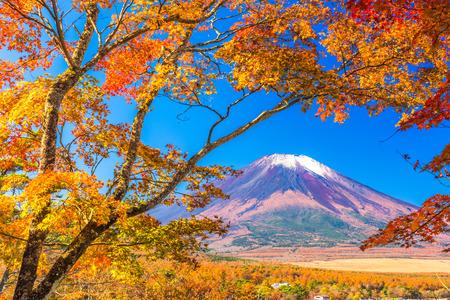momiji: Mt. Fuji, Japan from Yamanaka Lake in autumn.