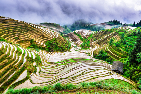 hillside: Yaoshan Mountain, Guilin, China hillside rice terraces landscape. Stock Photo
