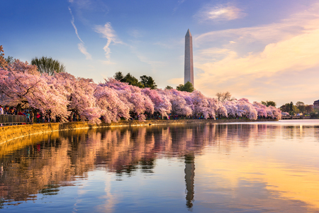 アメリカ、ワシントン DC、タイダル ・ ベイスンで春のシーズンにワシントン ・ モニュメントと。 写真素材