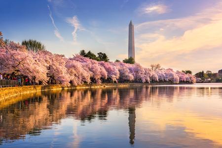 Washington DC, de VS bij de getijbekken met Washington Monument in het voorjaar seizoen. Stockfoto