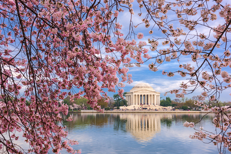 seaonal: Washington, DC at the Tidal Basin and Jefferson Memorial during spring.