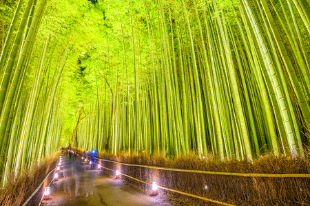 kyoto: The bamboo forest of Kyoto, Japan. Stock Photo