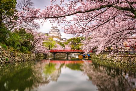 Himeji, au Japon, au château de Himeji, au cours de la saison des cerisiers en fleurs au printemps. Banque d'images - 75762905