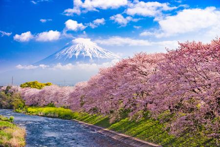 富士山と川の春。