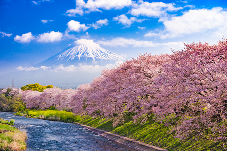 Mt. Fuji, Japan and river in Spring. 스톡 콘텐츠