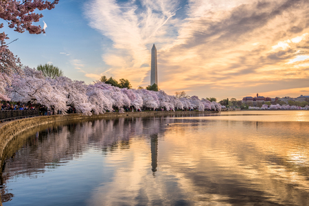 Washington DC, USA at the tidal basin with Washington Monument in spring season.