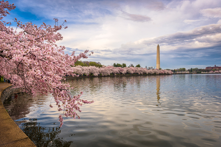 Washington DC, USA in spring season. Stok Fotoğraf