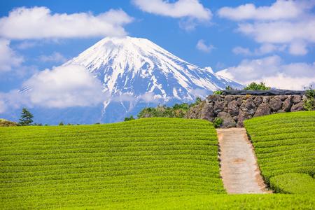 Fuji, Japan bij Mt. Fuji en theevelden.