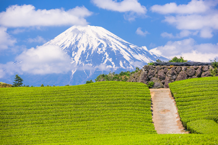 Fuji, Japonia na górze Fuji i pola herbaciane.