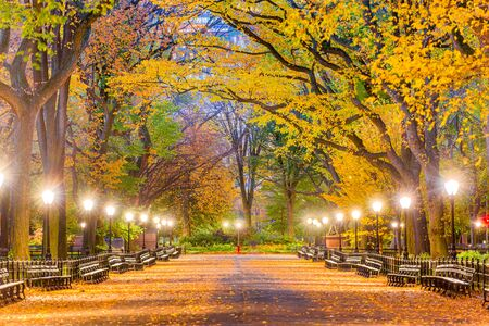 Central Park at The Mall in New York City during autumn dawn. Imagens