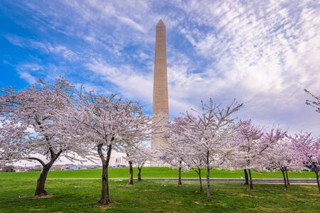 Washington DC, USA in spring season on the National Mall.