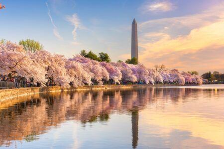 Washington DC, USA at the tidal basin with Washington Monument in spring season.