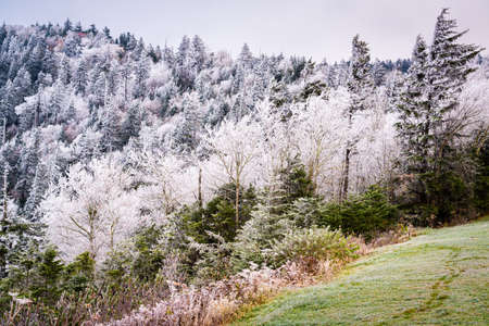 Great Smoky Mountains National Park, USA in early winter frost.