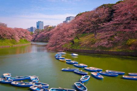 Tokyo, Japan at Chidorigafuchi Imperial Palace moat during the spring season.
