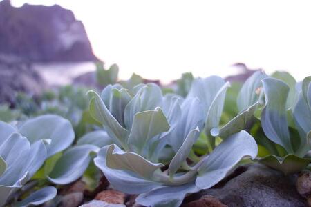 velvety: Velvety plants during the sunset