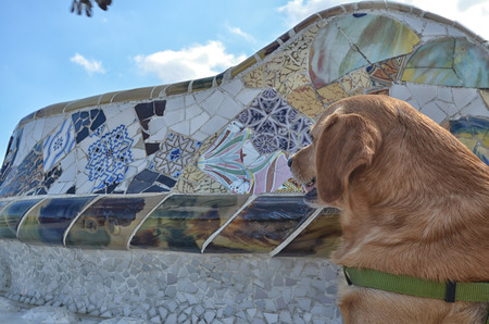 half breed: Domestic dog at Parc Guell Stock Photo