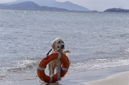Rescue dog comes out of the sea with preserver