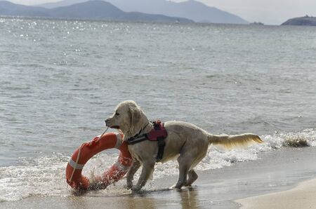 Rescue dog comes out of the sea with lifebelt