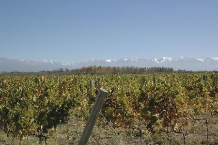 altitude: High altitude vineyards of Valle de Uco