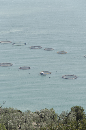 intensive: View of intensive aquaculture in the Mediterranean sea