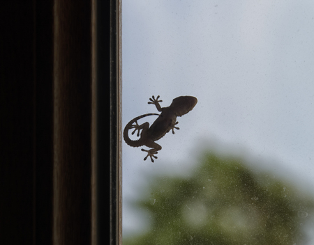 newt: Silhouette of gecko that can be used as logo Stock Photo