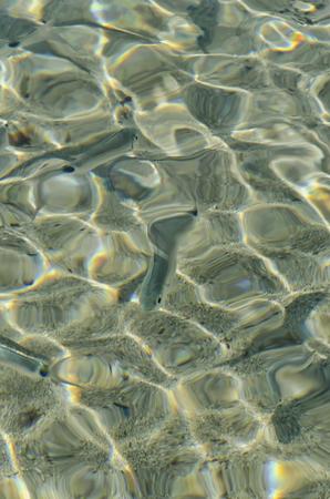 Un branco di pesciolini nuota in acque cristalline Archivio Fotografico - 76531203
