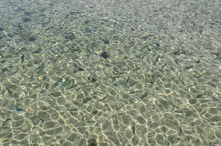 La vista del banco dei pesci nuota in acqua di cristallo Archivio Fotografico - 76561350