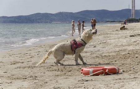 Rescue dog shakes to dry just out of the sea Stock Photo