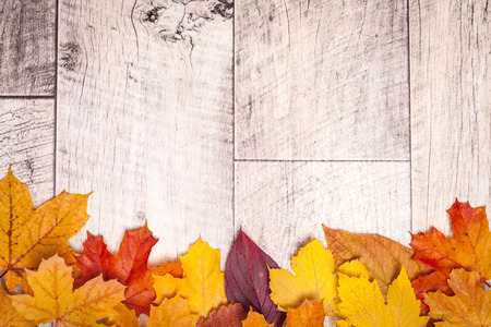 autumn colors: Wooden autumn background
