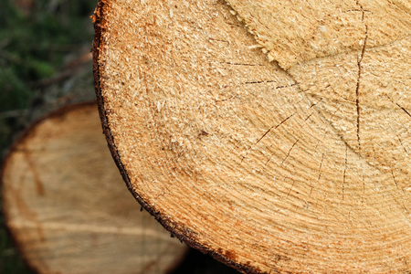 One frame of a tree on the grass. sawed wood