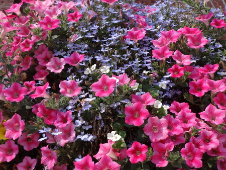 pinkish: Summer flowers with a lot of pinkish color