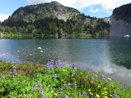 coldwater: A serene lake with wild flowers Stock Photo