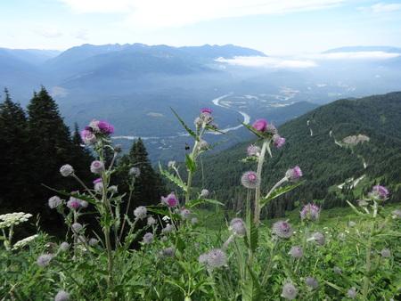 skagit: A view from Sauk mountain Stock Photo