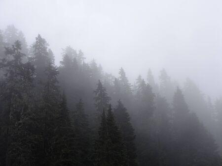 misty forest: Misty forest Stock Photo