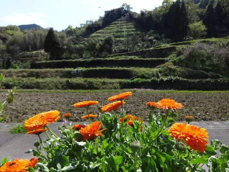 terraced: A counrtyside terraced fields Stock Photo