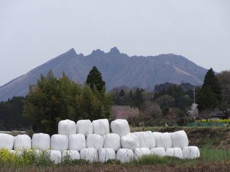hay bales: Nekodake and hay bales Stock Photo