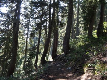 land slide: Curved Tree Trunks Stock Photo