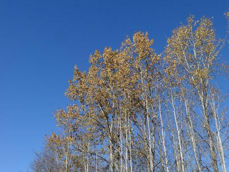 alder: Alder fall scene