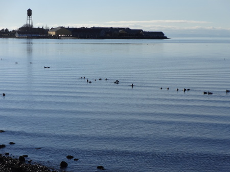 migratory birds: Calm Semiahmoo Bay with migratory birds on a winter