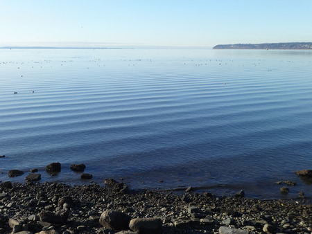 migratory: Calm Semiahmoo Bay with migratory birds on a winter
