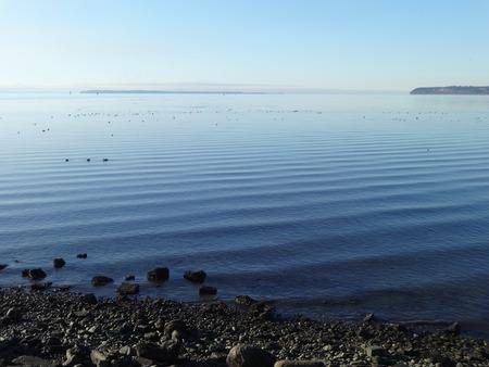 migratory birds: Calm Semiahmoo Bay with migratory birds on a winter