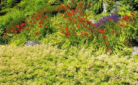 early summer: A garden in early summer