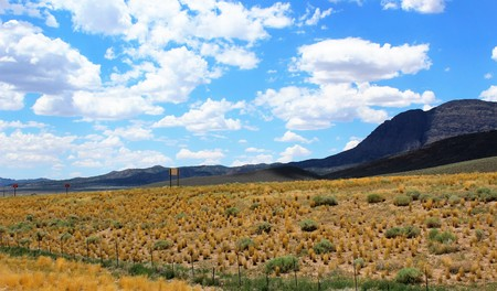 american field service: Desert mountains in the Western United States in the summer Stock Photo