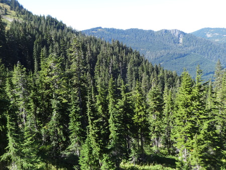 pacific northwest: Mountain forest in the Pacific Northwest Stock Photo